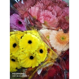 Gerberas standart box Mix