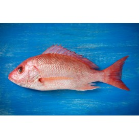 Red Fish 300/500G Cx 3Kg Cong Eurochefe
