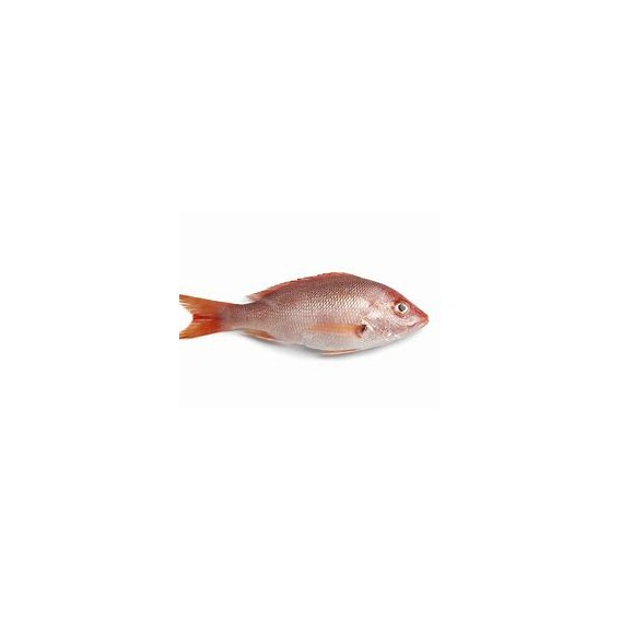 Red Fish 300/500G Cx +/- 6 Kg Cong.