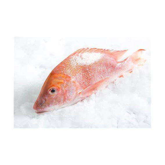 Red Fish 200/300G Cx 3Kg Cong. Eurochefe